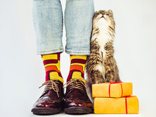 Men's Legs, Stylish Shoes, Colorful Socks With A Pattern And A Gray, Fluffy Kitten. Concept Of Style, Fashion And Beauty