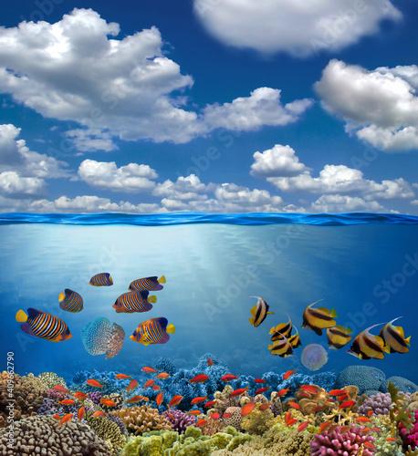 Fototapeta Split view with sky and beautiful coral reef underwater