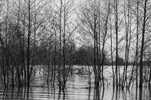 Floods Of The River Meuse During Winter In The National Park Eijsder Beemden Near Maastricht, After Heavy Rain Fall And Melting Snow In The Ardennes. It Gives Amazing Reflections With The Trees