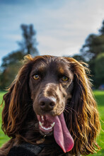 Brown Long Coated Dog On Green Grass Field