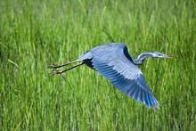 Blue Bird Flying Over Green Grass Field