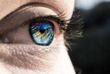 Blue Eye In Macro Lens
