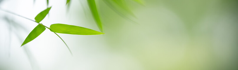 Closeup of green nature bamboo leaf on blurred greenery background in garden with bokeh and copy space using as background cover page concept.