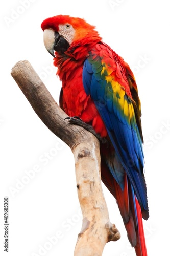 red and yellow macaw Fototapete