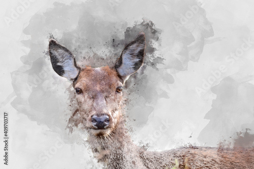 Digital watercolor painting of Beautiful image of red deer doe in vibrant gold and brown woodland landscape setting © veneratio