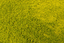 A Fragment Of A Soft Carpet, Which Is An Array Of Lettuce-colored Fluffy, Fleecy Loops, Randomly Twisted And Crushed On A Surface Similar To A Grass Lawn. Textile Abstract Green And Yellow Background