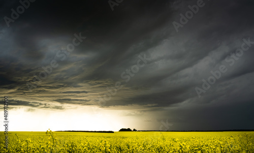 Canvas-taulu A large storm forming over a blooming yellow rapeseed field on the Canadian prai