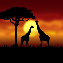 Giraffes In Africa At Night