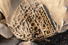 Tafoni On Rock At The California Coast. Thee Holes Typically Develop On Sandstone And Granite Rocks