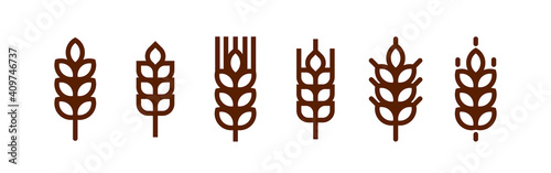 Fototapeta Barley spike or corn ear. Bakery, bread or agriculture logo concept. obraz