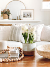 Interior Still Life In A Brightdid Century, Bohemian Living Room Featuring White Hyacinths On A Coffee Table.