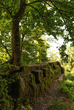 Ruinen Und Alte Mauern Im Wald Mit Bäumen Bei Sonnenlicht Lost Places Verlassene Orte