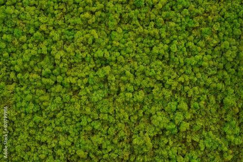 Obraz na plátně Green moss on a wall