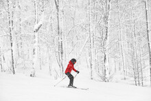 Alpine Skiing Skier Going Dowhill Fast Against Snow Covered Trees Background During Winter Snowstorm. Woman In Red Jacket And Goggles.