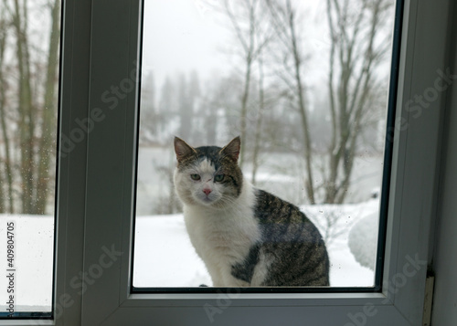 Fotografie, Obraz picture with window, motley tomcat sitting behind the window, blurred view behin
