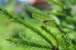 duża ważka na liściu - makro, przybliżenie latającego owada, insekta