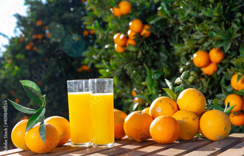 Fotografia Fresh oranges and orange juice in glass outdoors on wooden table overlooking cit