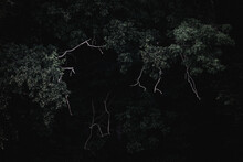 Tree In The Dark Forest