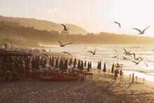 Seagulls On The Beach Sunset
