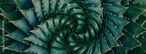 Slika na platnu Aloe aristata close up