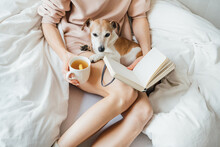Enjoying Relaxed Time With Pet In Bed Reading Planning Making Notes And Cup Of Tea With Lemon. Woman In Pink Jumper Sitting In Bed With Dog Jack Russell Terrier. Chilling Mood. Cozy Home Atmosphere.