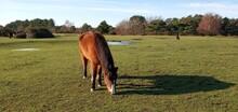Wild Horses - Frozen Pools