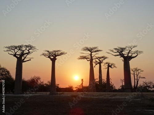 Foto Baobab trees at sunset at the avenue of the baobabs in Morondava (Madagascar)