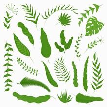 Vector Set Of Tropical Leaves. Modern Illustration Of Various Botanical Elements.