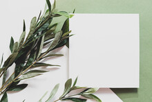 White Sheet Of Paper, Eucalyptus Branch And Long Shadows. Empty Postcard Scene Mockup. Flat Lay On The Green Background In Sunlight, Top View.