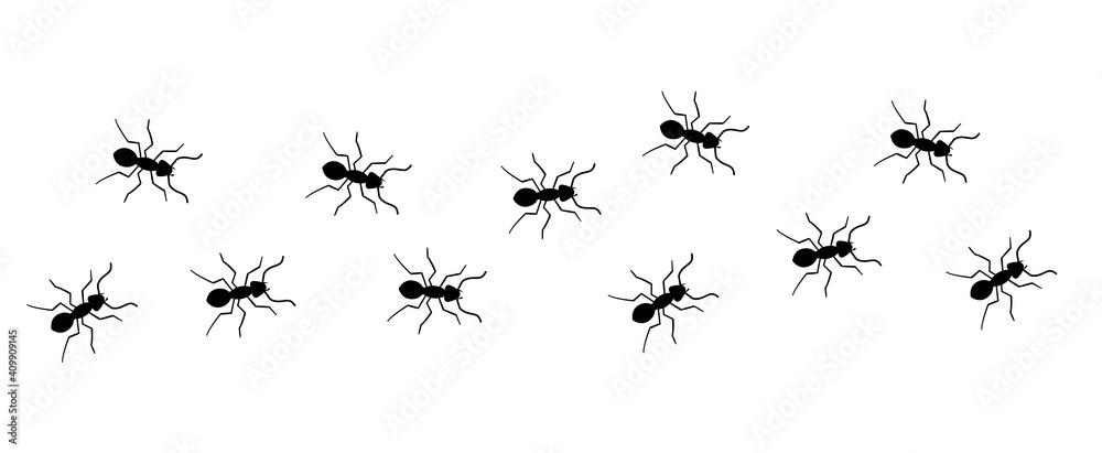 Fototapeta Ant vector trail marching illustration. Ant bug pest control background teamwork