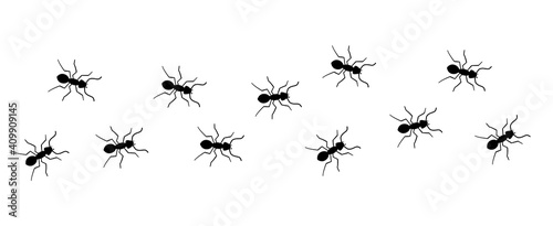 Obraz Ant vector trail marching illustration. Ant bug pest control background teamwork - fototapety do salonu