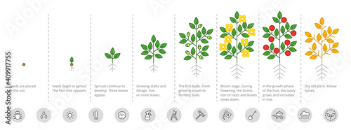 Stampa su Tela Plant growth stages