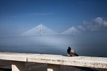 Puente Cubierto De Niebla Desde Paseo Marítimo