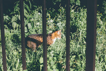 Cat In The Grass Behind The Fence