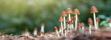 Close Up Of Mushroom Under Sunlight In The Autumn Forest