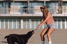 Side View Of Female With Stick Playing With Black Labrador Retriever On Sunny Day In City