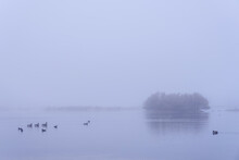 Ducks On A Lake In A Myst Morning In Winter