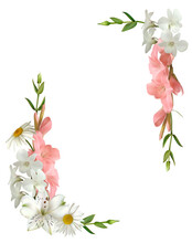 Flowers. Floral Background. Orchid. White. Pink. Lilies. Gladiolus. Chamomile. Border.