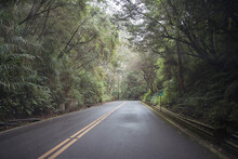Asphalt Roadway Surrounded By Woods With Green Trees On Overcast Day In Alishan Township