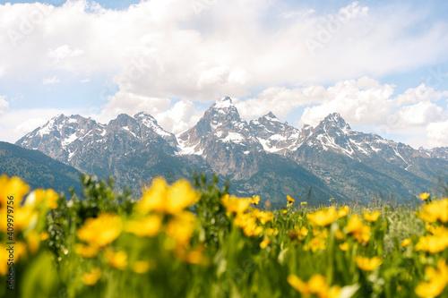Obraz na plátne Yellow Flowers in Grand Teton National Park
