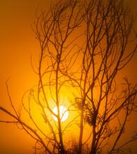 Sundown Sun Shining Through Branches Of Tree In Nature