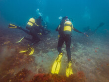 Unrecognizable Divers Studying Depth Of Ocean And Vegetation At Bottom