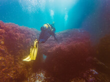 Unrecognizable Diver Studying Depth Of Ocean And Vegetation At Bottom