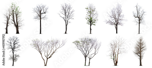 Obraz Collection of dead tree,dry tree, isolated on white background. - fototapety do salonu
