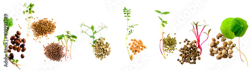 set of micro greens isolated on a white background grains and sprouts Poster Mural XXL