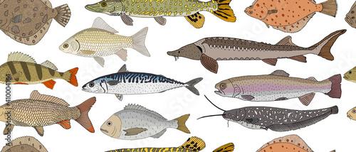 Fotografia, Obraz Seamless pattern of hand drawn river and sea fish
