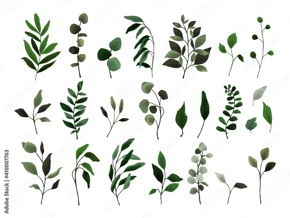 Fototapeta Collection of greenery leaves branch twig flora plants. Floral watercolor wedding objects, botanical foliage. Vector elegant herbal spring illustration for invitation card