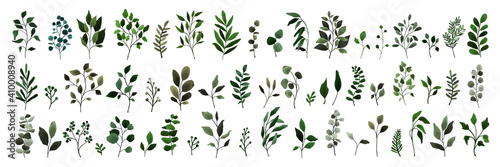 Obraz na płótnie Collection of greenery leaves branch twig flora plants