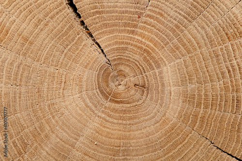 Fotografie, Obraz Round cut down tree with annual rings, Old  Wood texture abstract background
