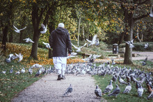 The Old Muslim Man Is Walking Into The Pigeons Group, Moses Gate Country Park, Bolton, England.